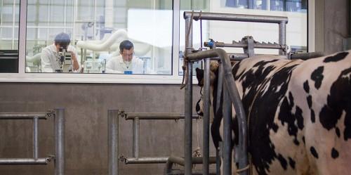 De l'autre côté de la vitre, le laboratoire traite la semence prélevée quelques minutes plus tôt.