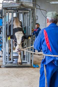 Les soins aux animaux (parage, soins vétérinaires...) se font dans un lieu spécifique : l'infirmerie.