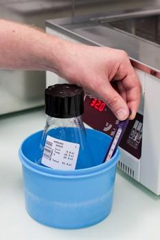 Le prélèvement sera dilué en fonction de la concentration de spermatozoïdes dans l'échantillon, afin que chaque paillette en contienne 20 millions.