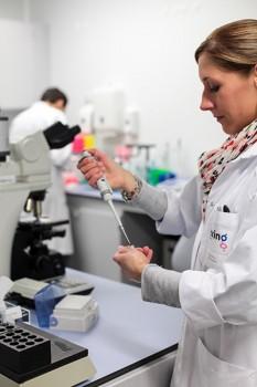 Plus de 95% des pailletes sont de race laitière et 99% des paillettes produites par le laboratoire de St Aubin sont des doses femelles.