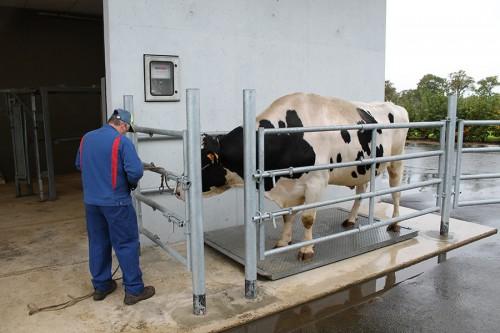 Un suivi de santé régulier est réalisé pour chaque animal (ici la pesée).